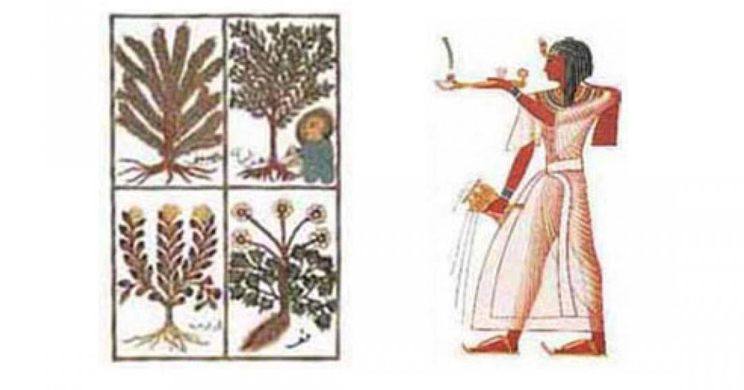 نخستین شیمیدان و عطر ساز