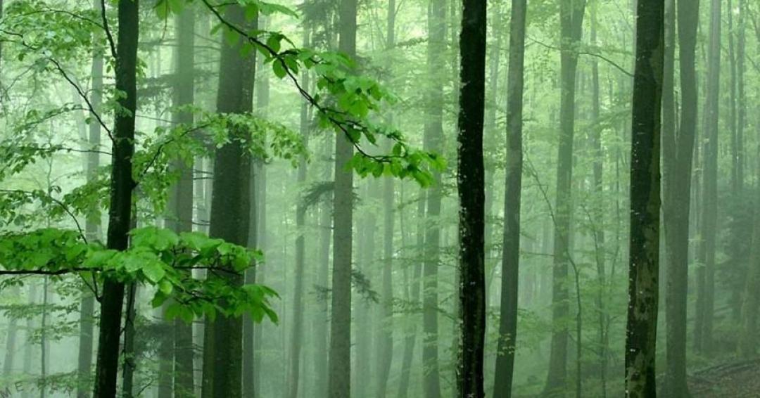 رایحه چوب