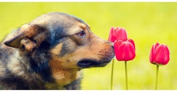 ارتباط بویایی بین گیاهان و حیوانات
